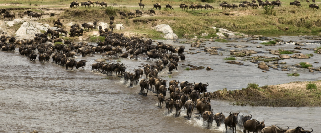 nomads-of-the-serengeti