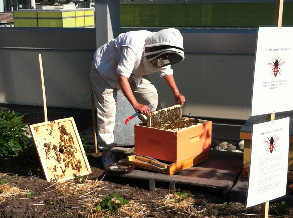 Cracking Wax on the Hive
